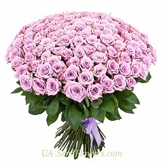 Buy Bouquet of 151 purple rose cheap with delivery to Kiev and Ukraine