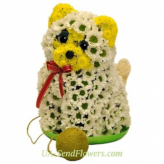 Buy Toy Flower Cat with clew cheap with delivery to Kiev and Ukraine