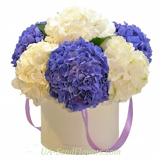 Buy Flowers in a box Regatta cheap with delivery to Kiev and Ukraine