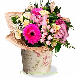 Buy Flowers in pots Gentle kiss cheap with delivery to Kiev and Ukraine
