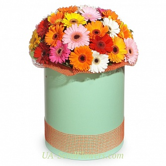Buy Flowers in a box Colorful box cheap with delivery to Kiev and Ukraine
