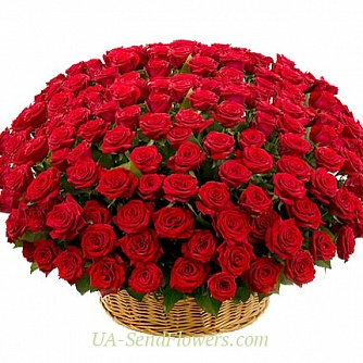 Buy Basket of flowers 301 red rose cheap with delivery to Kiev and Ukraine