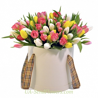 Buy Flowers in box 81 tulip cheap with delivery to Kiev and Ukraine