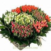 Cart 301 multicolored tulip