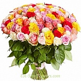 Bouquet of 151 colored roses