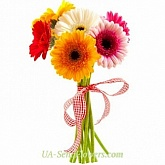 Bouquet of Colorful gerbera