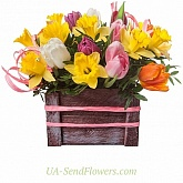 Flowers in a box Spring