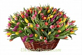 Shopping 101 Tulips